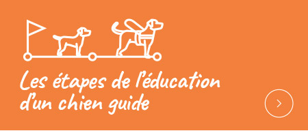 Les étapes de l'éducation d'un chien guide